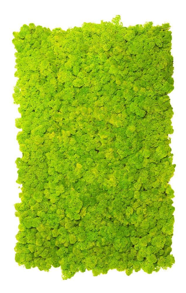 licheni stabilizzati