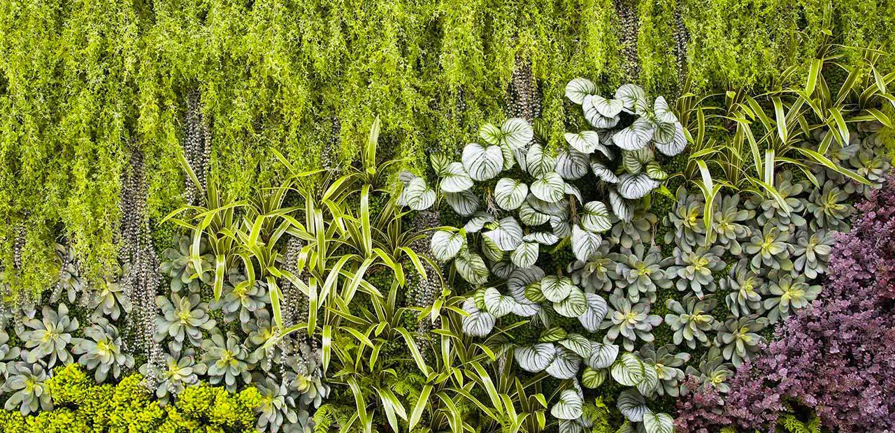 Pareti Verdi Verticali Costi pareti vegetali e gardini verticali - 6 motivi per
