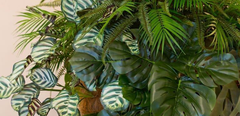 composizioni vegetali aeree