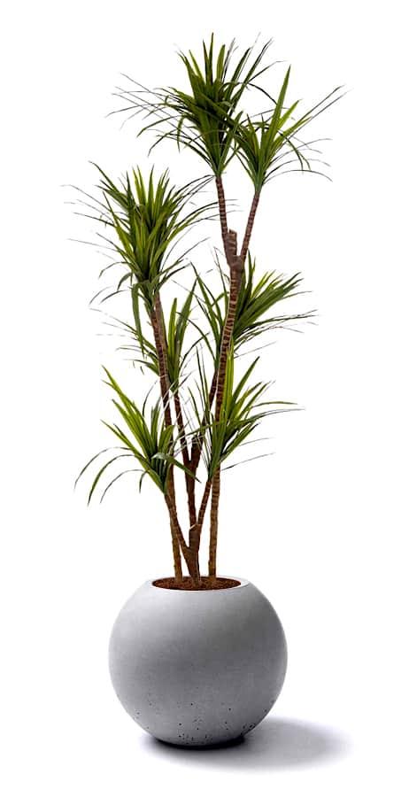 piante semi-naturali